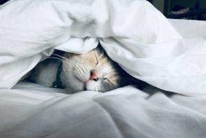 restful sleep
