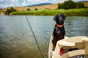 Colorado Healthy Lifestyle - Outdoors fishing with dog